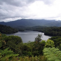 The Rainforest Lake