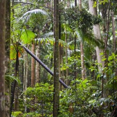 Rainforest TV